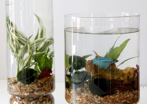 how to create an indoor water garden