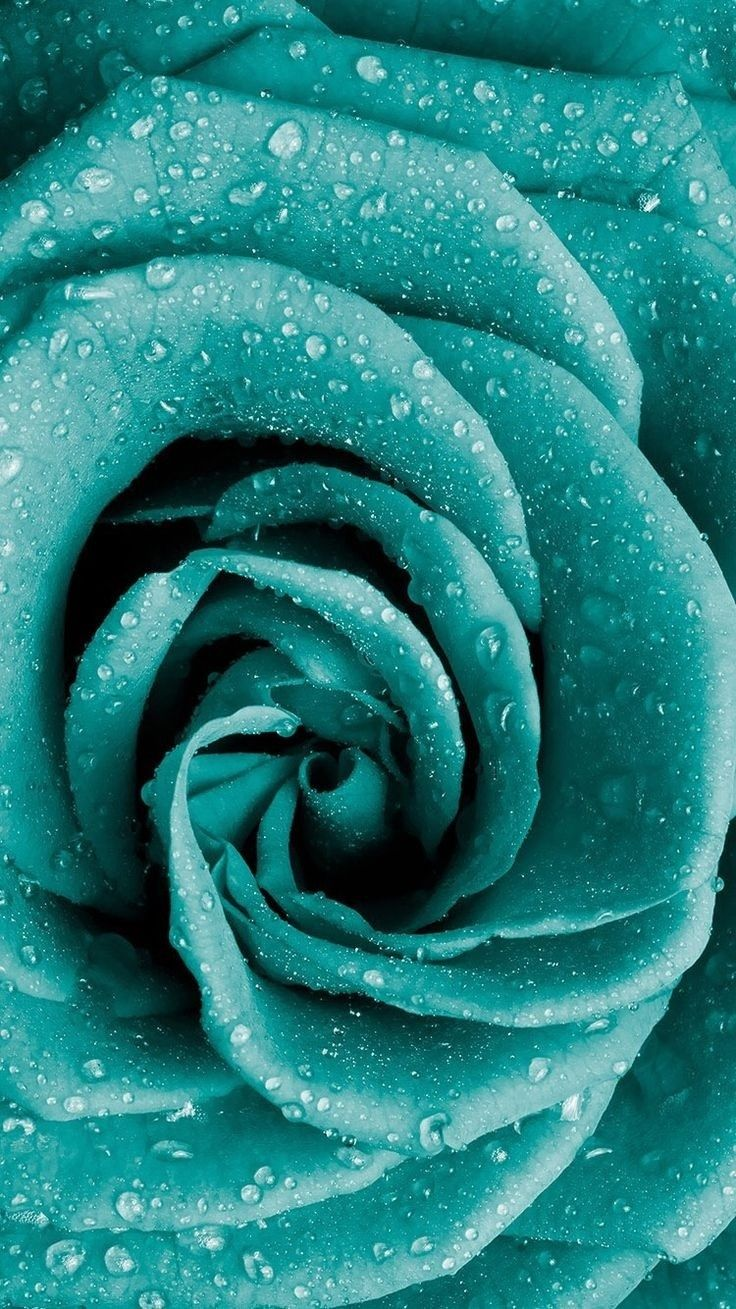 Pin By Eliana Mendes On Wallpapers In 2020 Nature Iphone Wallpaper Rose Wallpaper Turquoise Wallpaper