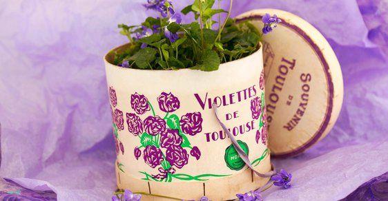 Fialkový svět v Toulouse: Slavný francouzský parfém vznikl před více než 80 lety