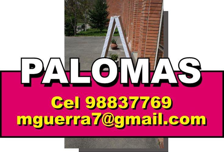 PALOMAS, PUBLICITARIAS, LETREROS, PENDONES