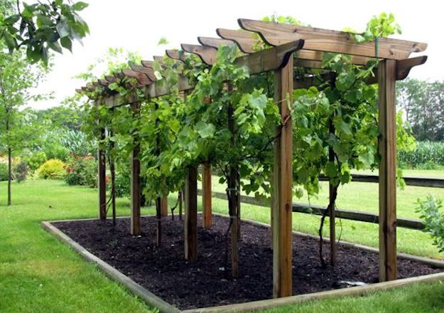 Check out How to Make Wine in Your Backyard | Winemaking Basics for Homesteading Beginners at http://pioneersettler.com/how-to-make-wine-at-home/