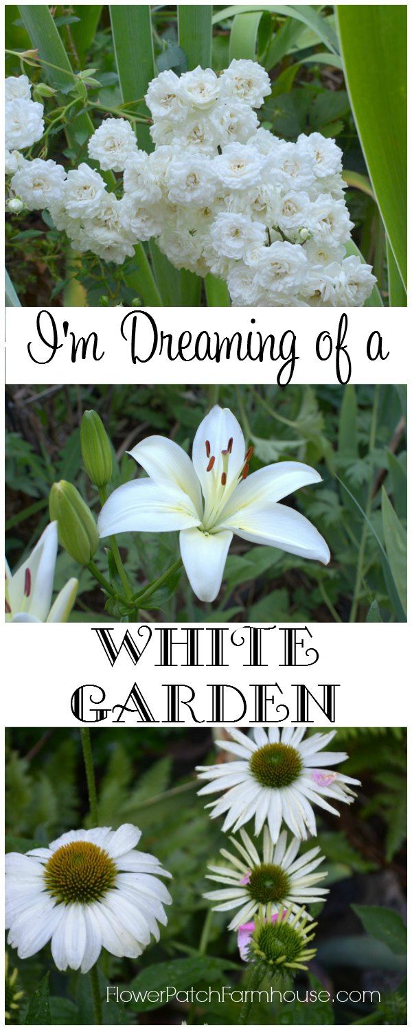 Add beautiful white flowers to your garden, they will make your garden glow at night and provide the perfect foil for all the brightly colored blooms. FlowerPatchFarmhouse.com