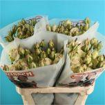 Rose spray Sweet Avalanche! #Flowers #Spray #Roses #Wholesale #Wedding