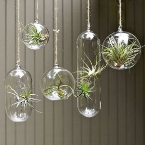 suspension de tillandsias des plantes sans terre ni eau dans des boules de verre d co jardin. Black Bedroom Furniture Sets. Home Design Ideas