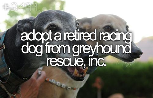 http://www.greyrescue.com/ or a puppy that had been abandoned/abused, allow it to feel love for the first time/again ♥