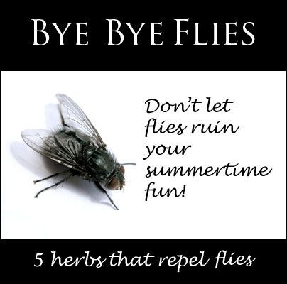 Don't let flies ruin your summertime fun try these 5 herbs as a DIY fly repellent