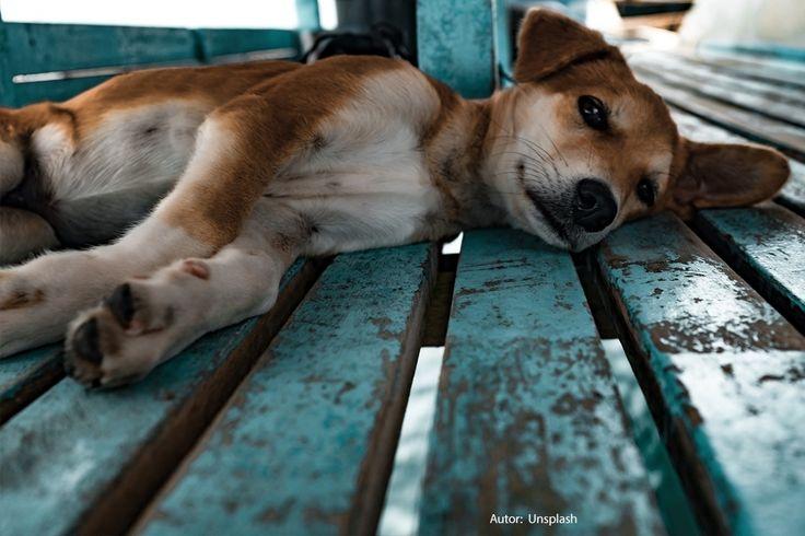 Los perros mestizos, los considerados sin raza, son mayoría y no hay dos iguales