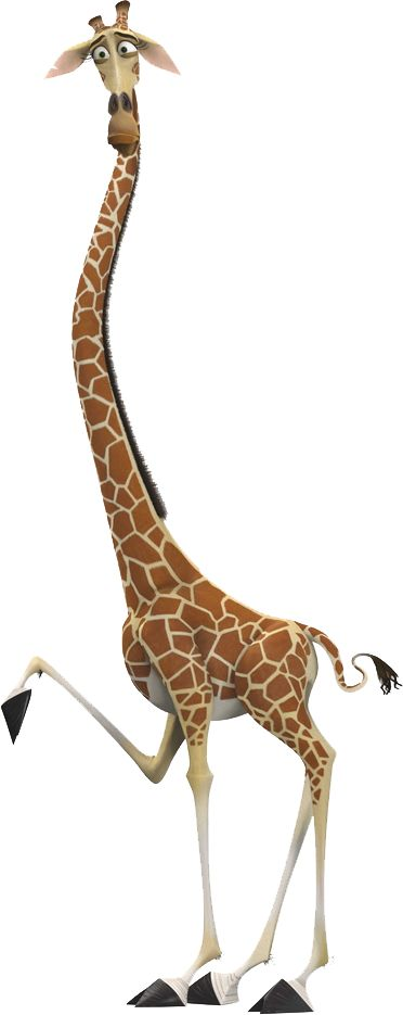 Madagascar - Melman the Giraffe - is a hypochondriac who was transferred to the Central Park Zoo as a young adult. Because of his previous stay in the Bronx Zoo, Melman believes that he's a real worldly guy, the most experienced in his circle of friends. He's also on a lot of medication and has lots of experience in MRI machines.