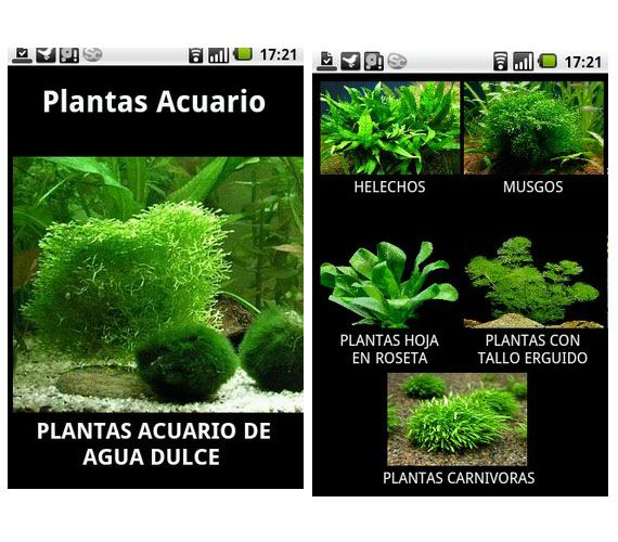 15 best images about plantas acu ticas para acuarios on for Plantas de acuario