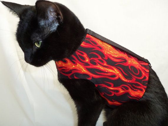 What a great idea!  This one looks great on my cat... how about yours?  CoolCats Black and Orange Flame Cat Harness by RockinDogs on Etsy, $19.95