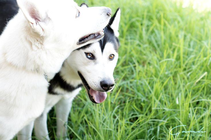 #Oso #Kiboo #Huskies
