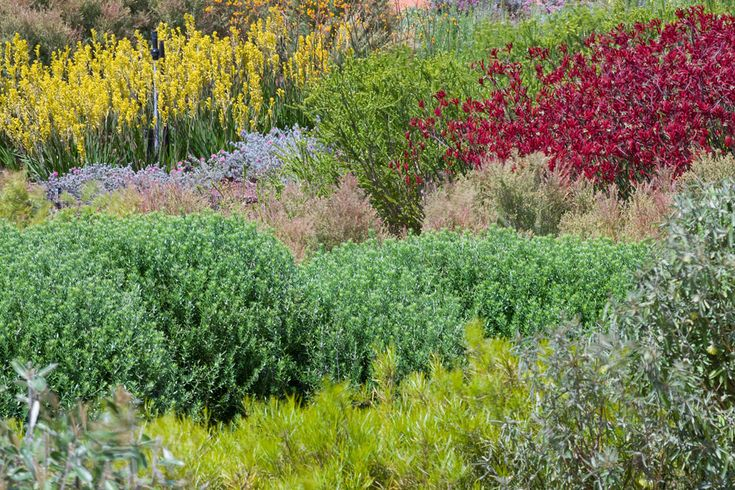 The-Australian-Garden-by-Taylor-Cullity-Lethlean-and-Paul-Thompson-16 « Landscape Architecture Works | Landezine