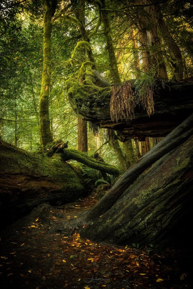 Redwood Forest - California [7952-5304] [OC] - Posted by: Andrewshaphoto