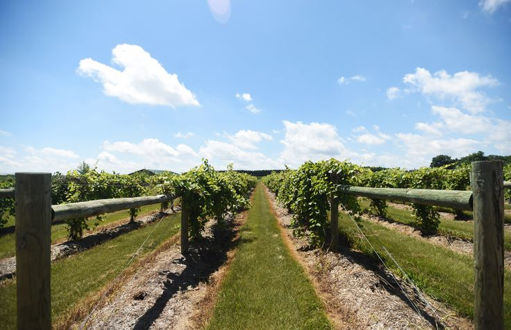 What to drink at 11 wineries in Minnesota and Wisconsin