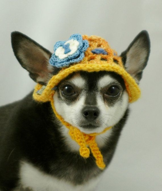 Dog hat crocheted Sun Bonnet small Yellow with Blue