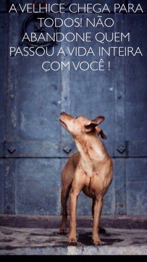 AMOR INCONDICIONAL! <3 <3 <3  #cachorro #maedepet #maedecachorro #filhode4patas #petmeupet