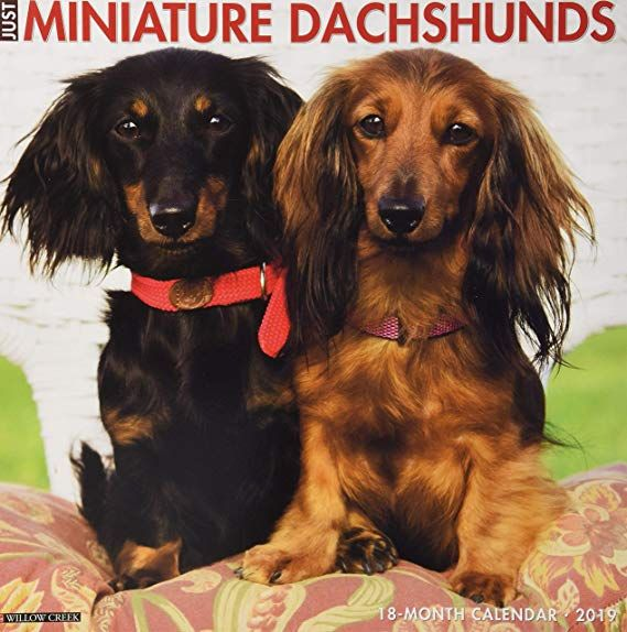 Just Mini Dachshunds 2019 Wall Calendar Dog Breed Calendar