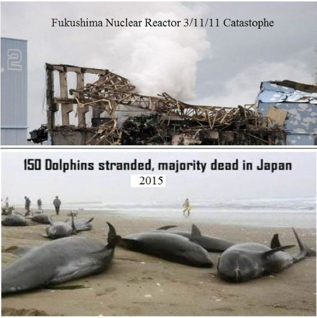 Petitioning: THE UNITED NATIONS - Take over the cleanup and containment of the Fukushima, Japan, nuclear catastrophe in order for it to be done properly and timely. Go to  http://www.barbarabillig.com to support this by signing the petition!