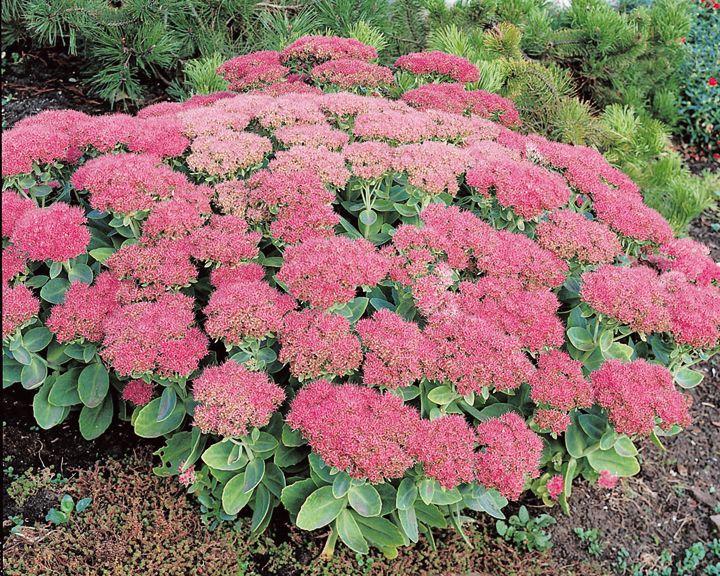 93 best jardin et exterieurs images on pinterest plants for Alexandre jardin le petit sauvage