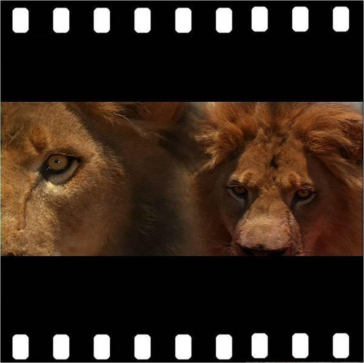 frete-gratis-a-sombra-e-a-escurido-dvd-original-lacrado-ego-14410-MLB236111796_1361-F.jpg (940×939)