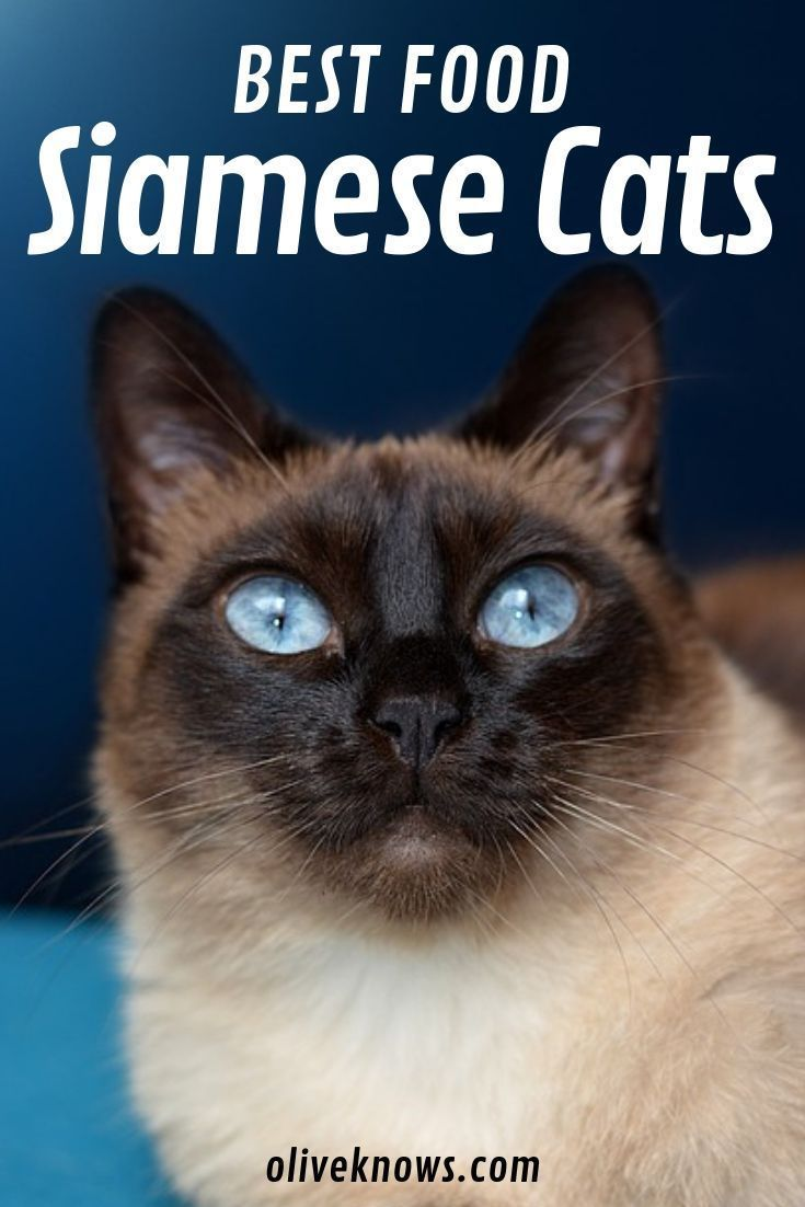 Looking For The Best Cat Food For Your Siamese Friend Then This