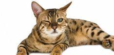 Douleur chez le chat : 23 signes à ne pas négliger