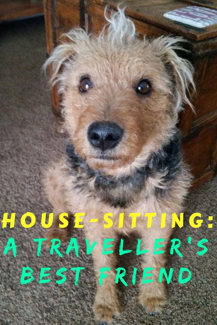 House Sitting A Traveller S Best Friend House Sitting Travel Best Pet Insurance