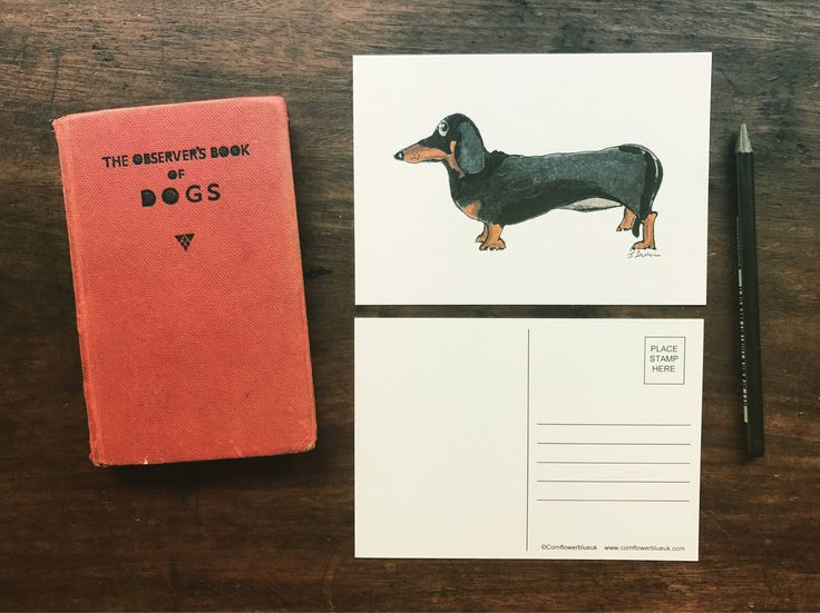 A personal favourite from my Etsy shop https://www.etsy.com/uk/listing/526728720/daschund-dog-postcard