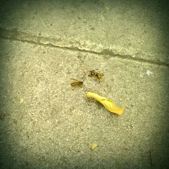 Και ύστερα ήρθαν οι μέλισσες!