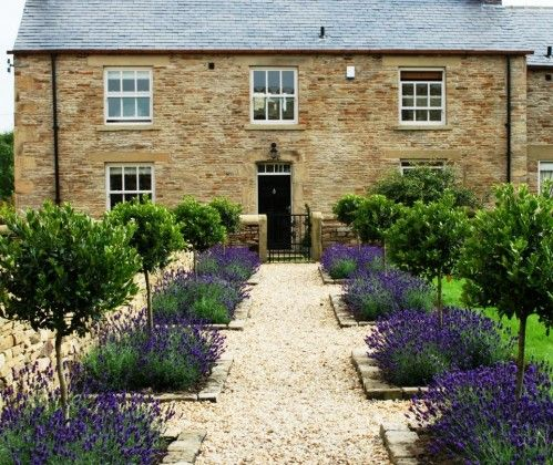 formal cottage garden with standard bay trees underplanted with lavender