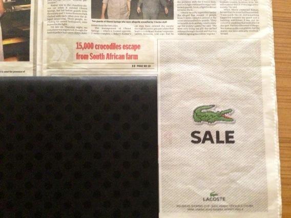 Crocodile Sale. #marketing