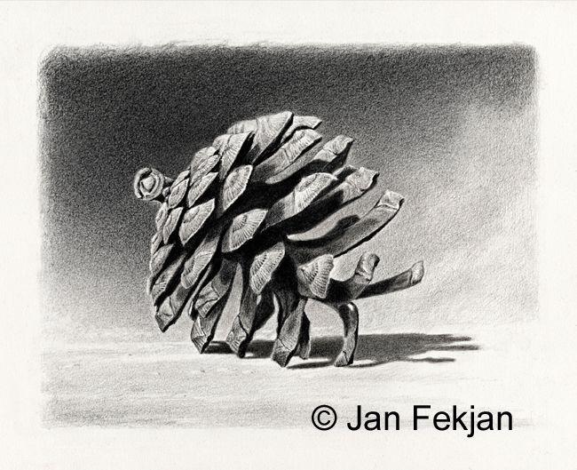 Jan Fekjan: Furukongle