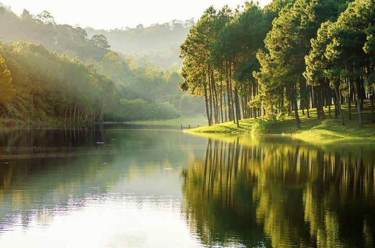 Jezioro, Wzniesienia, Drzewa