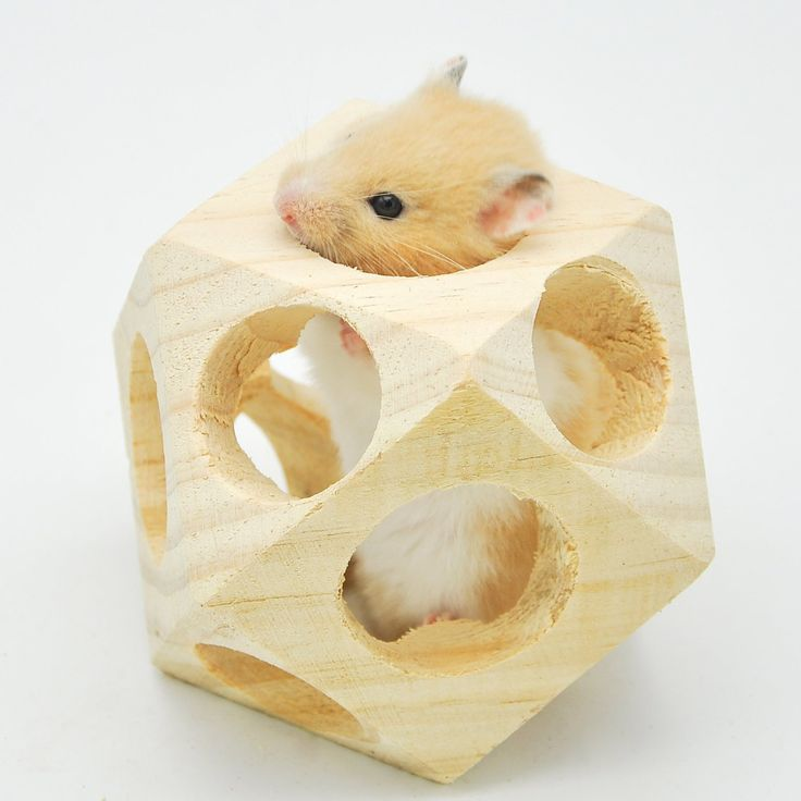 15 Best Images About Hamster Toys On Pinterest