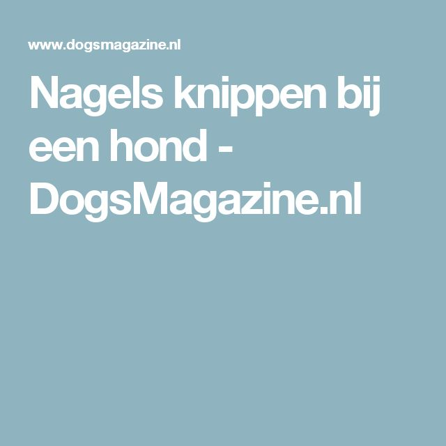 Nagels knippen bij een hond - DogsMagazine.nl