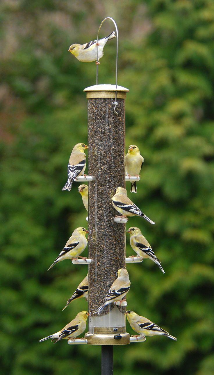 peanut wild omaha on downy feeder birds unlimited feeders tag bird woodpecker ne