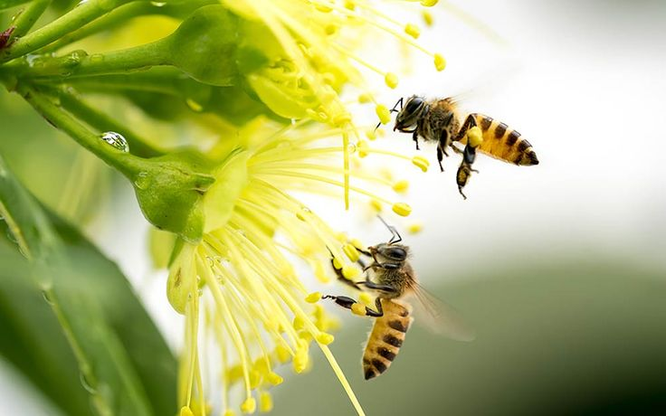 Everybody knows the crucial role that bees play in the flower and fruit pollination process, but how would bee extinction affect the coffee industry?