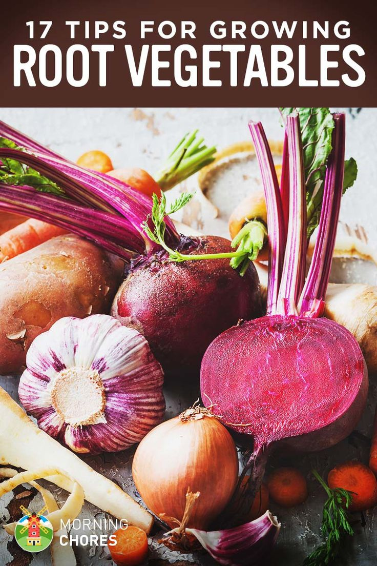 17 Tips for Growing, Harvesting, and Storing Root Vegetables Successfully