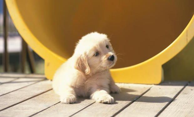 What Are the Best Dogs for Kids?