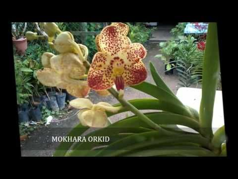 Beauty of Orchids 2016 | The Collection of Orchids | Orchid Collection 4