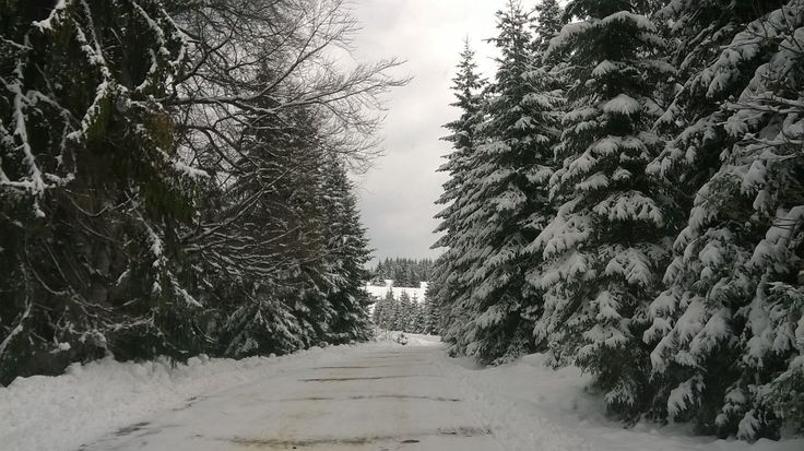 Wintery scenery on the way to Ialomita Cave