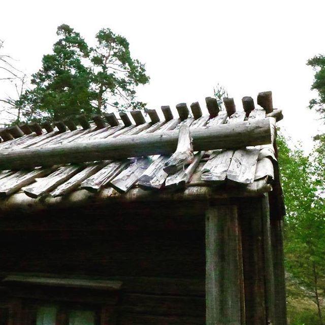 Tässä veljesparin toinen puolisko eli malkakatto. Sama kuvio, vedenpitävän tuohen päällä on auringonvalolta suojaava kerros joka pitää samalla tuohet paikoillaan. Tällä kertaa päällysmateriaalina on malkoja eli halkaistuja pieniä puunrunkoja yleensä kevyemmästä kuusesta. Malat on tapitettu toisiinsa harjalla ja räystäällä on painona painopuu, joiden ansiosta malat ja samalla tuohet pysyvät katolla. Malkakatto vaatii enemmän työtä ja ennen kaikkea puumateriaalia kuin turvekatto, eikä ole sen…