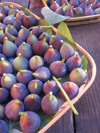 HEIRLOOM GARDEN www.lindseymadeoriginals.com #lindseymadeoriginals #garden #gardening  figs