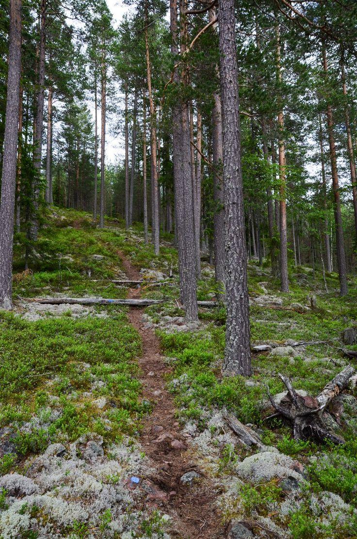 Vandringsled Dalarna | Wanderpfad Schweden | Hiking path Sweden