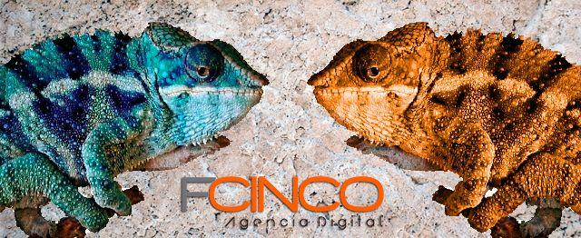 En FCINCO Conocemos la teoría del color aplicada a la realidad