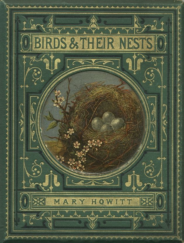Birds and their nests... given to someone from their dear aunt 1878.