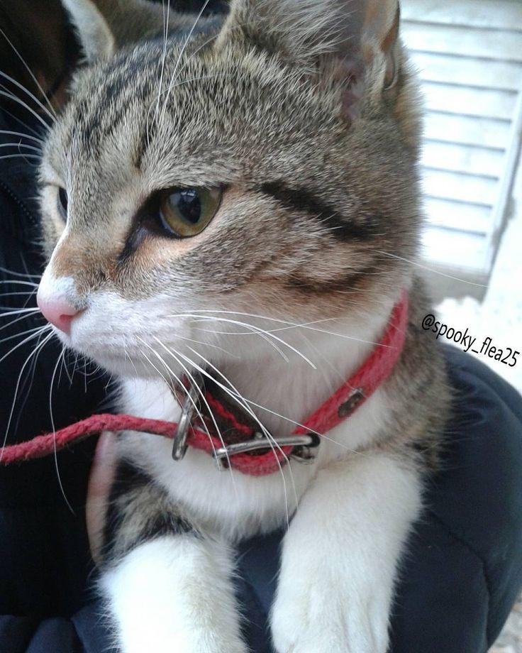"they say ""stay in your lane boy lane boy"" but we go where we want to     #cat #gato #Macri #twentyonepilots #music #alternative #tylerjoseph #joshdun #laneboy #friend #frase #happy #sad #photo #photography #instagram (? #mascota #pet #cute #lindo #canela #animals . [el gato de @sofuuojeda xd]"