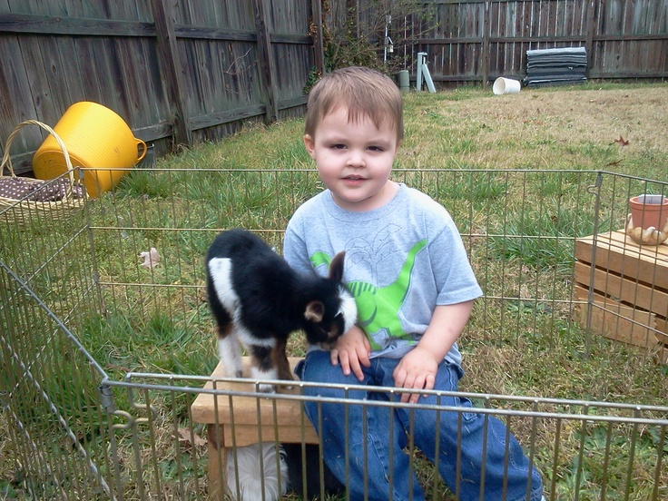 This little boy enjoyed playing with the baby goat during