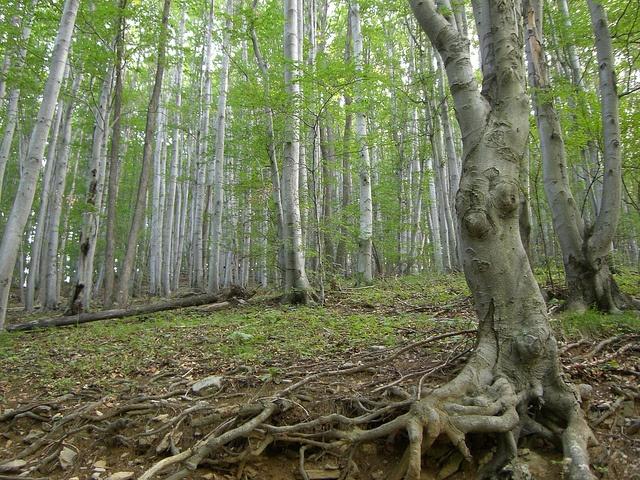the rabbit-tree
