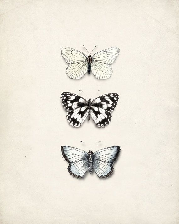 Antique Butterflies Illustration - Wall Decor Natural History Print No. 1 8x10. $15.00, via Etsy.